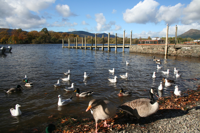 Birds on Derwentwater